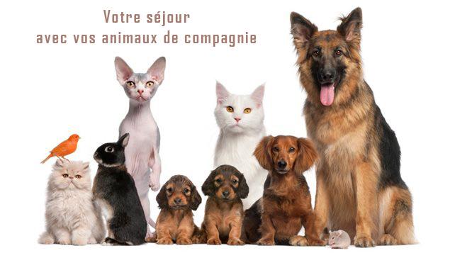 animaux de compagnie acceptés